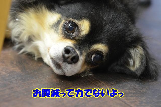 DSC_2042_20121120221940.jpg