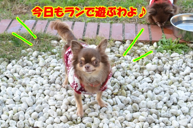 DSC_2117_20121122223347.jpg