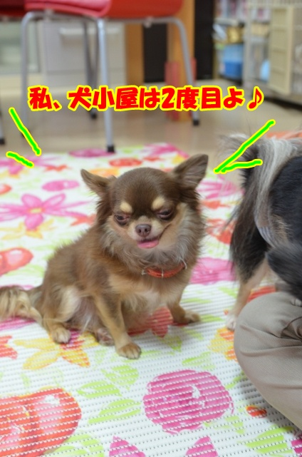DSC_2220_20121124204742.jpg
