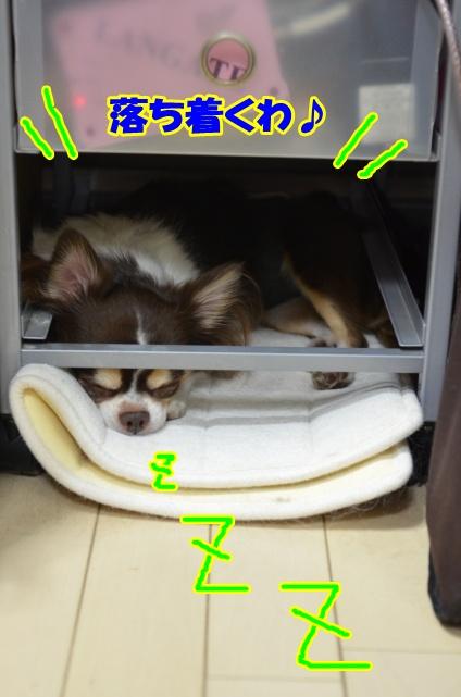DSC_2262_20121124220359.jpg