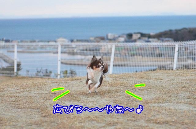 DSC_2429.jpg