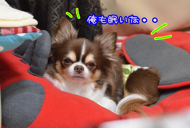 DSC_2671.jpg
