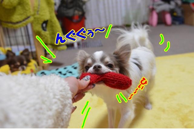 DSC_3295_20121217210846.jpg