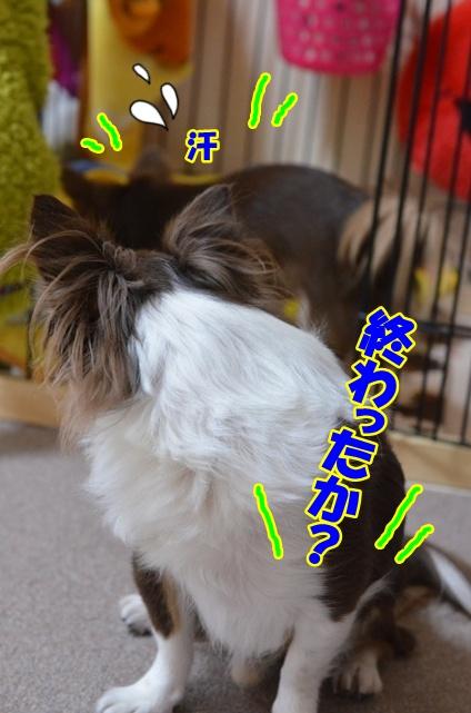 DSC_3301_20121222215632.jpg