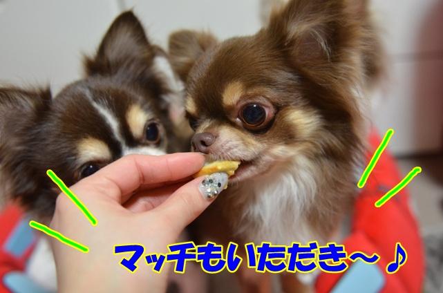 DSC_3460_20121220212159.jpg