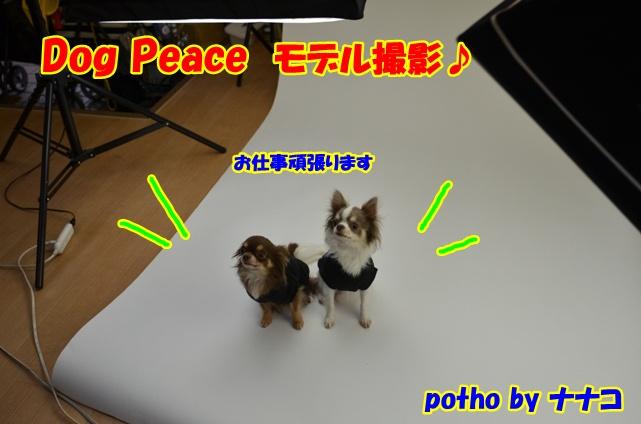 DSC_3511_20121226214006.jpg