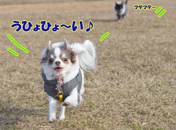 DSC_3718_20121227225143.jpg