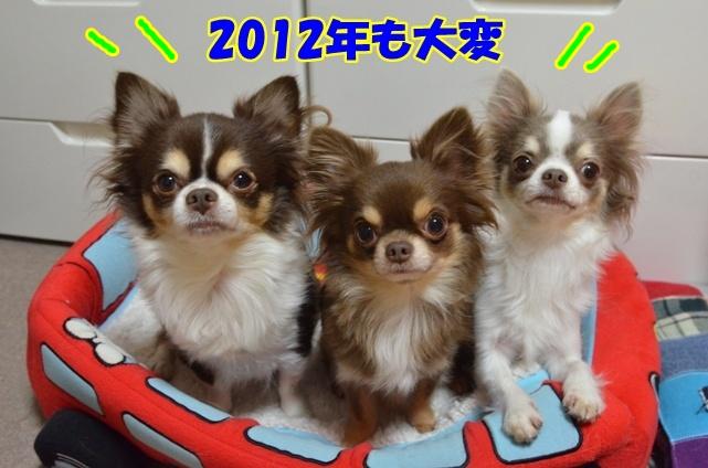 DSC_3789_20121230220608.jpg