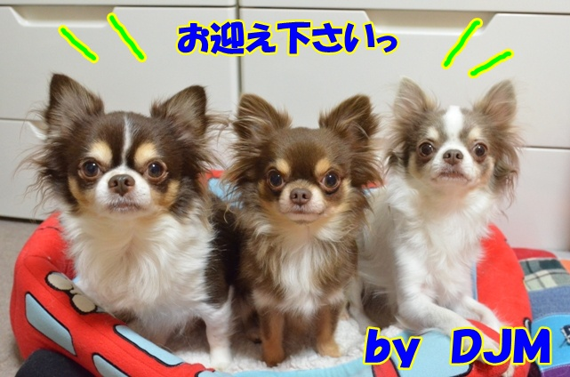 DSC_3797.jpg