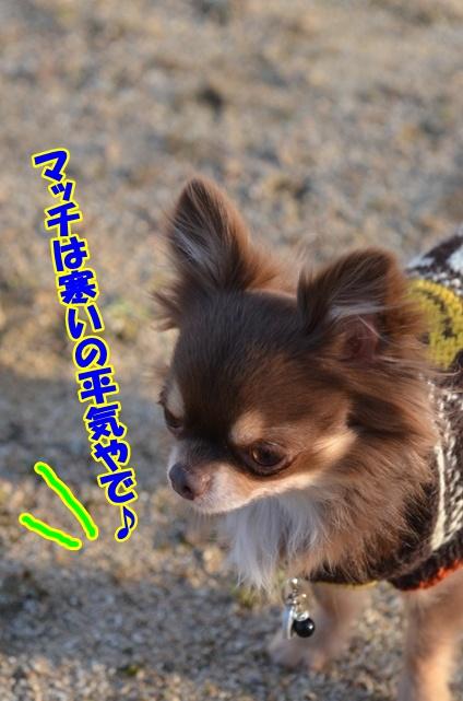 DSC_4088_20130109160012.jpg