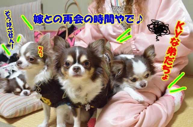 DSC_4162_20130113204854.jpg