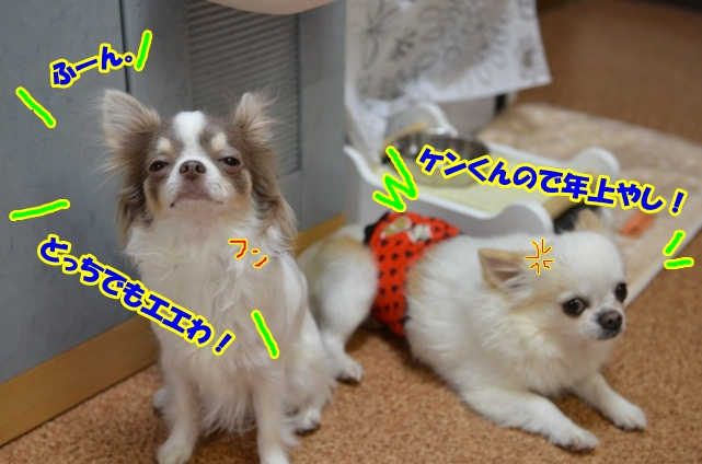 DSC_6982.jpg