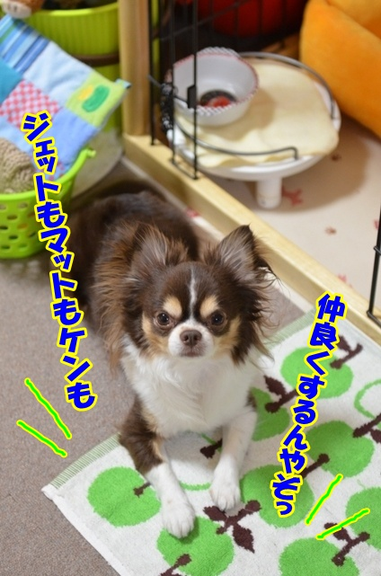 DSC_6992_20120514224206.jpg