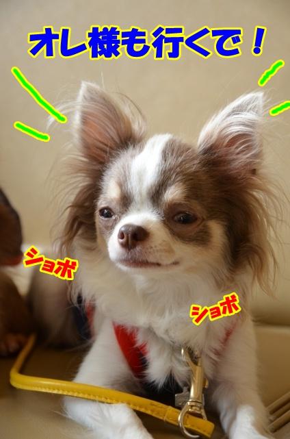 DSC_7516_20120614215411.jpg