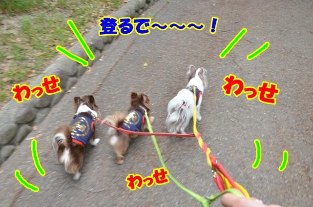 DSC_7630.jpg