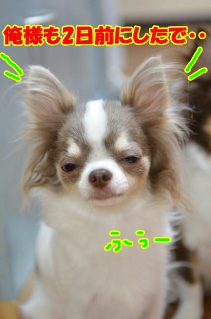 DSC_7688_20120618221639.jpg
