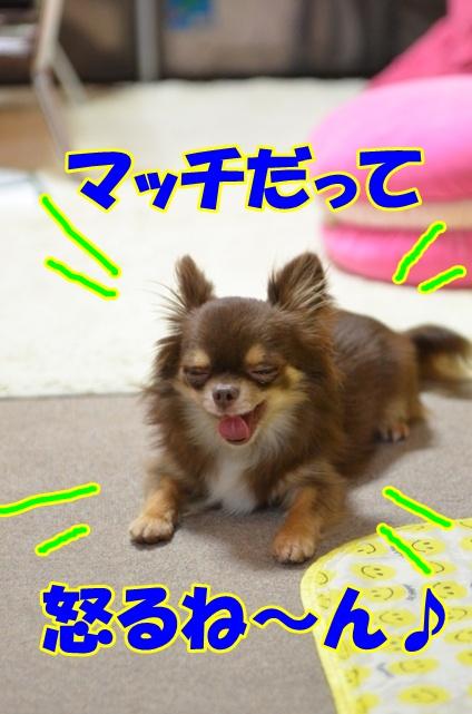 DSC_7691_20120617215854.jpg