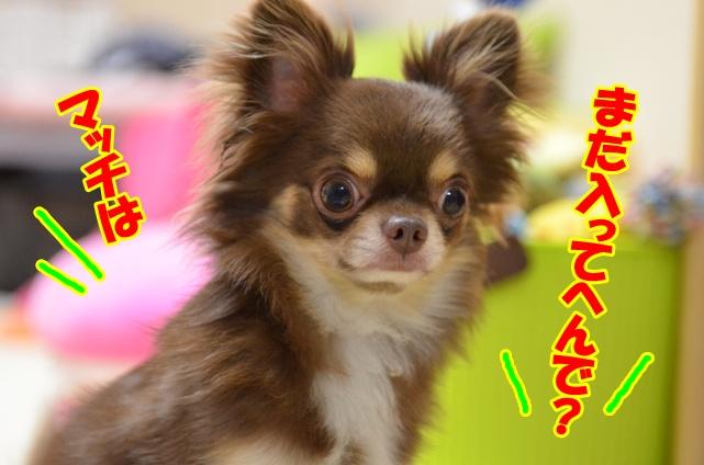 DSC_7694_20120618221637.jpg