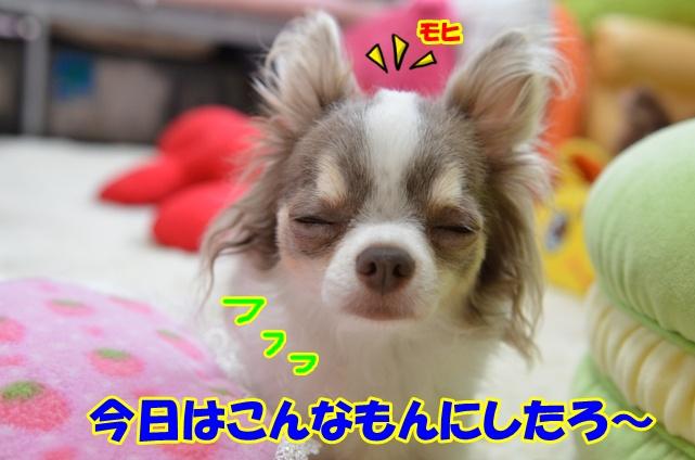 DSC_7735.jpg