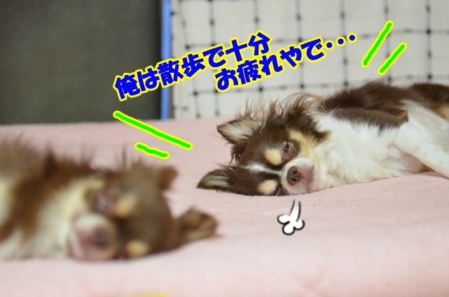 DSC_7782.jpg