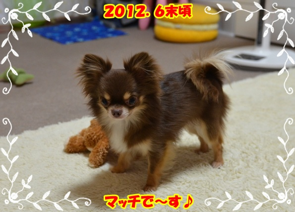 DSC_7850_20120807194054.jpg