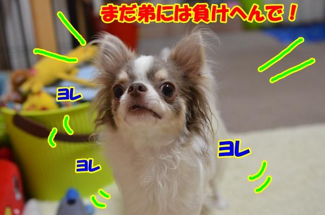 DSC_7932.jpg