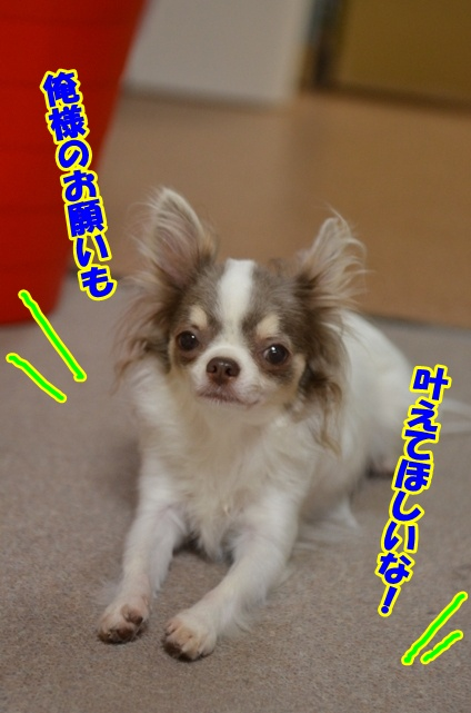 DSC_8179_20120708223406.jpg
