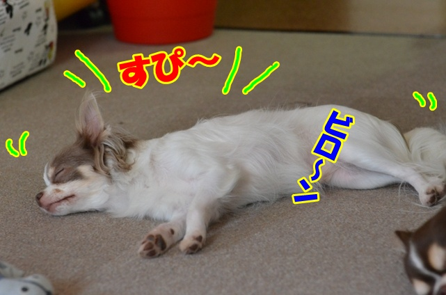 DSC_8192.jpg