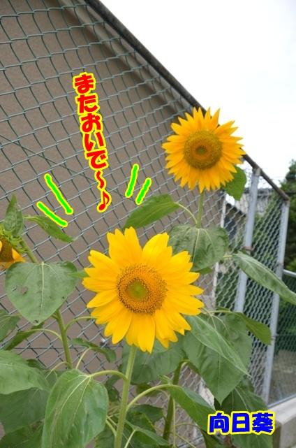 DSC_8252_20120712221102.jpg