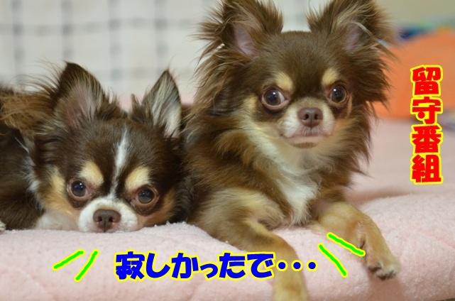 DSC_8259_20120716220114.jpg