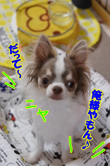 DSC_8281_20120716220113.jpg