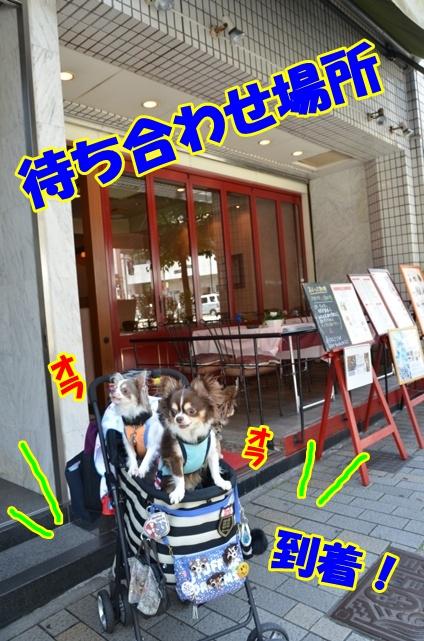 DSC_8372.jpg