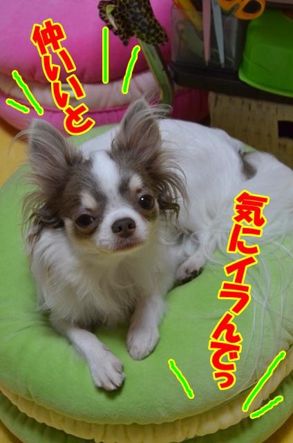 DSC_8591_20120729211203.jpg