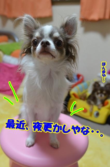 DSC_8633_20120729010640.jpg