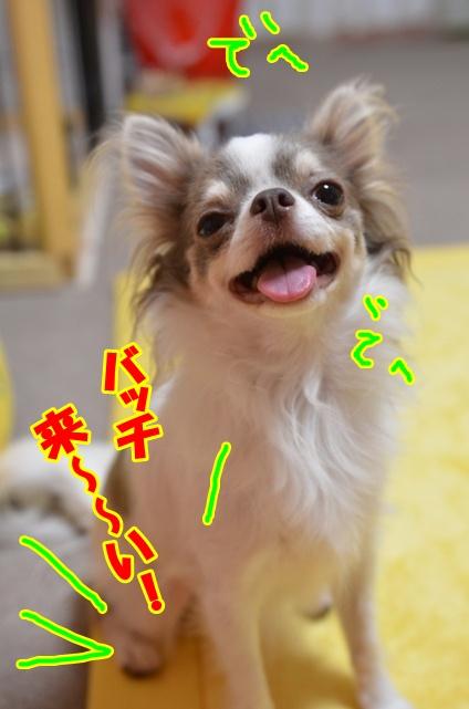 DSC_8841.jpg