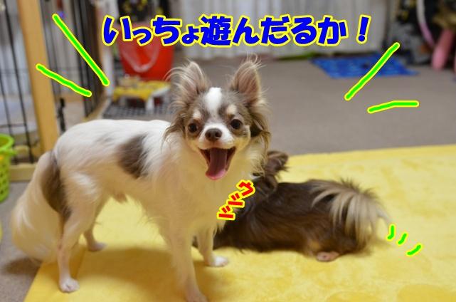 DSC_8855.jpg