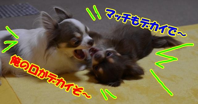 DSC_8864.jpg