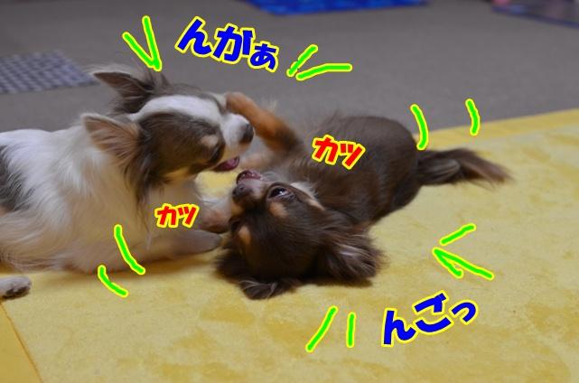DSC_8866.jpg