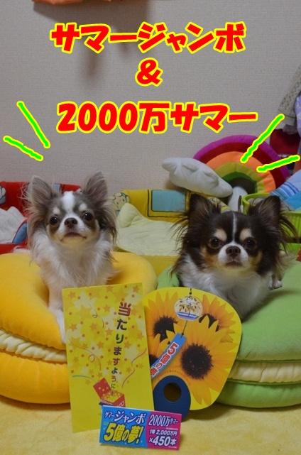 DSC_8883_20120804214921.jpg