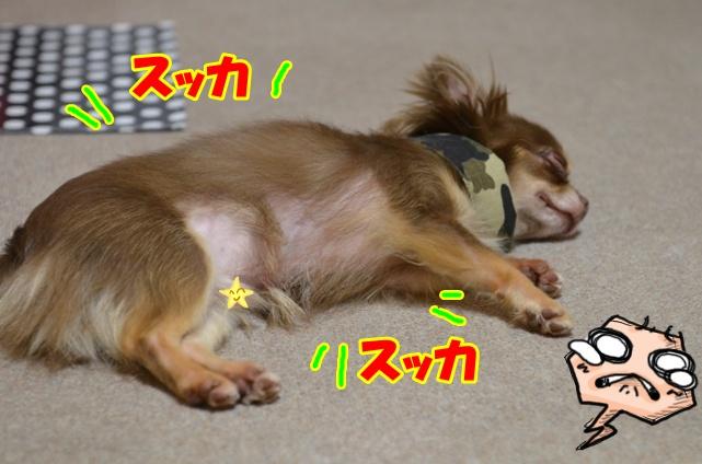 DSC_8893_20120807194053.jpg