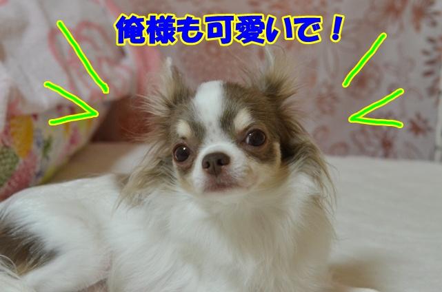 DSC_8942_20120811211622.jpg