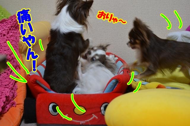 DSC_9022.jpg
