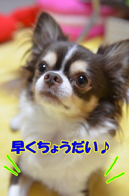 DSC_9040_20120814220403.jpg