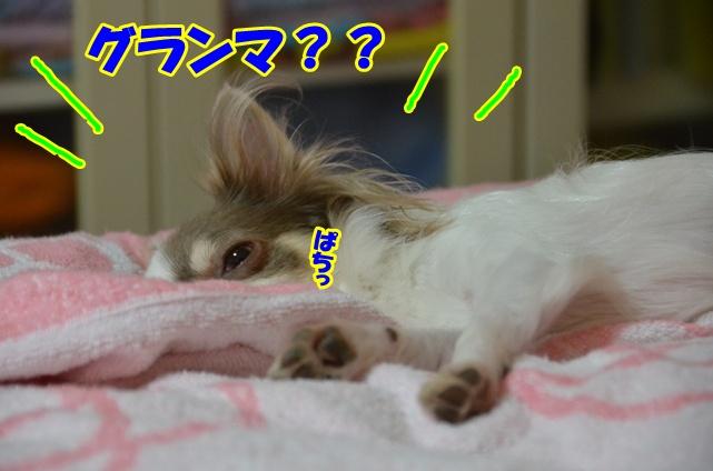 DSC_9098_20120818154831.jpg