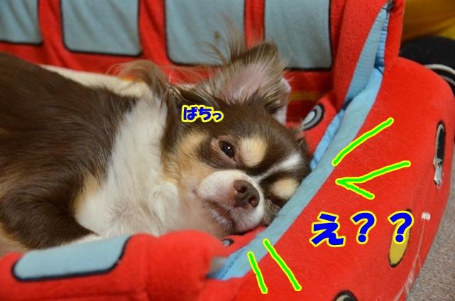 DSC_9100_20120818154831.jpg