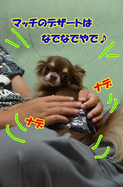 DSC_9119_20120823215229.jpg