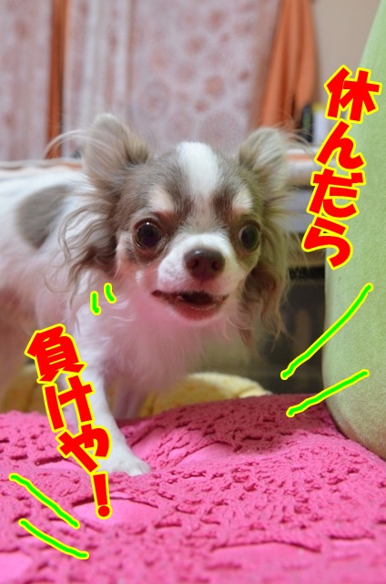 DSC_9475.jpg