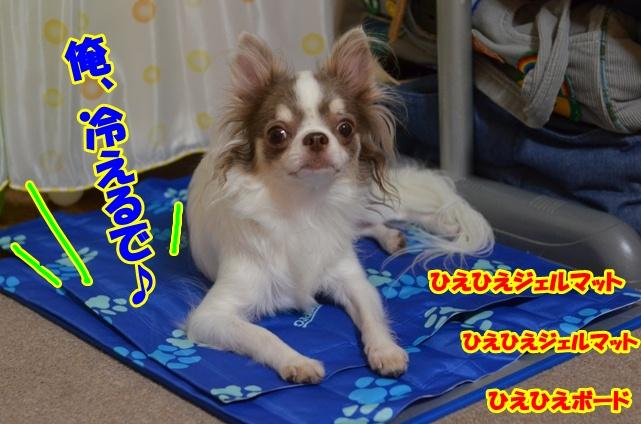 DSC_9477.jpg