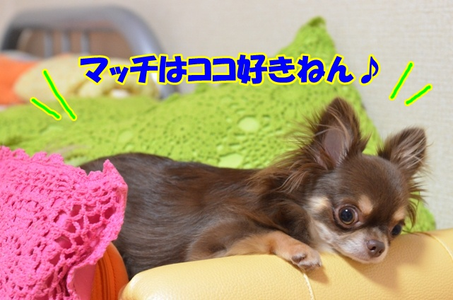 DSC_9479.jpg