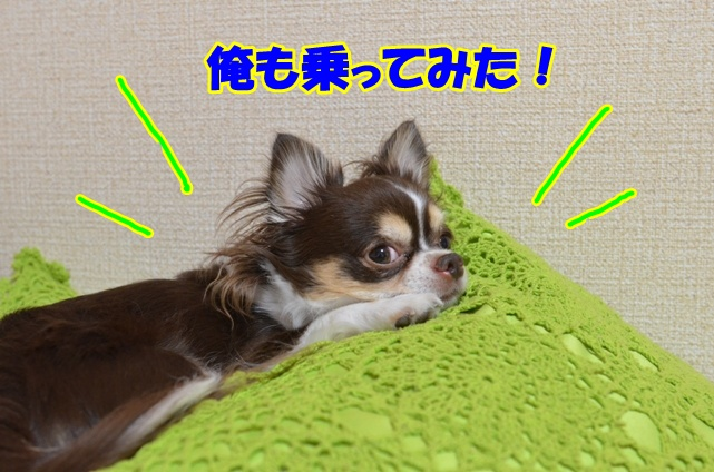 DSC_9486_20120905195934.jpg